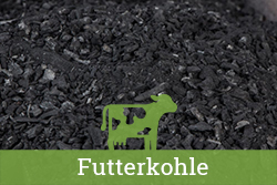 Teaser-Kat-Futterkohle